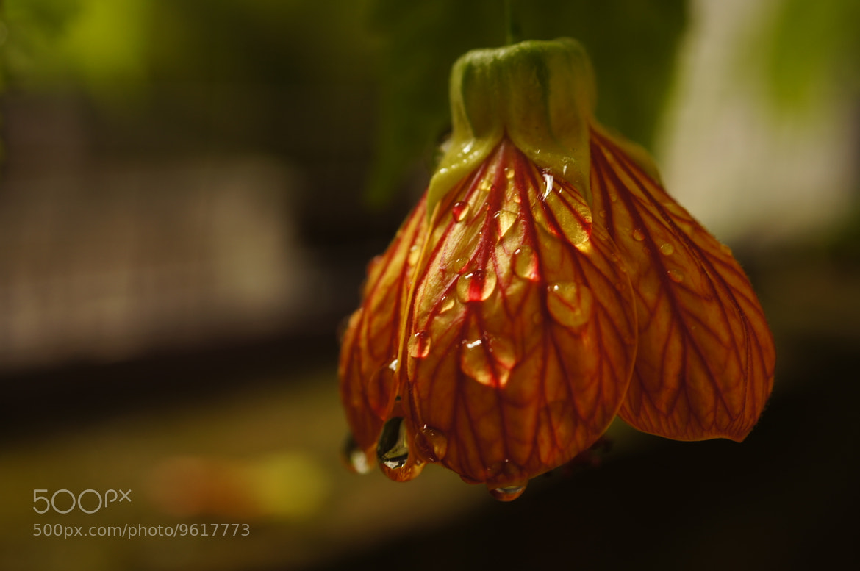 Photograph  Monsoon Beauty. by Afzal Khan on 500px