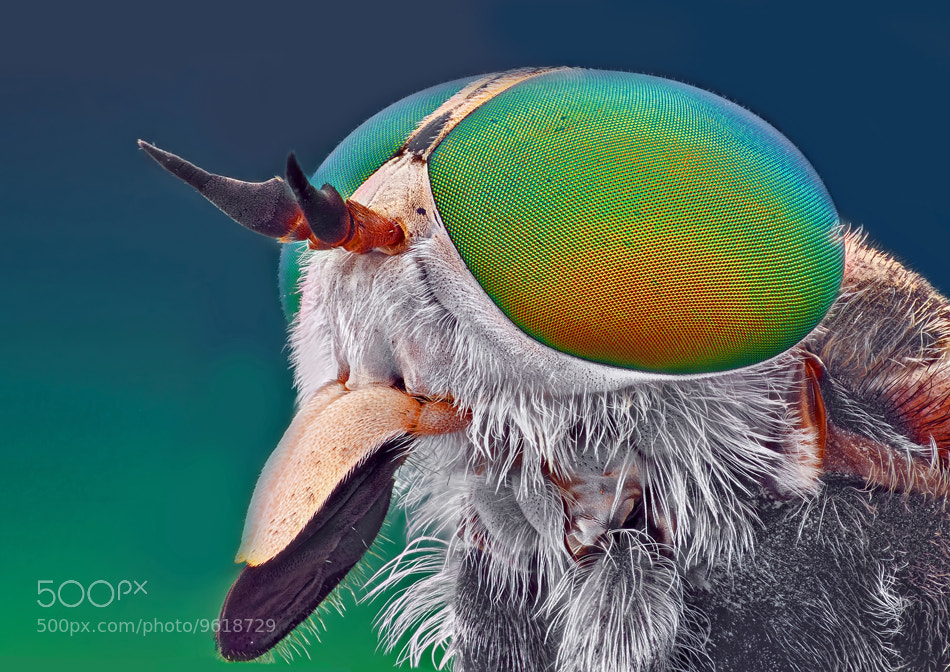 Photograph Horsefly by Omid Golzar on 500px