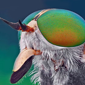 Horsefly by Omid Golzar (pinar)) on 500px.com