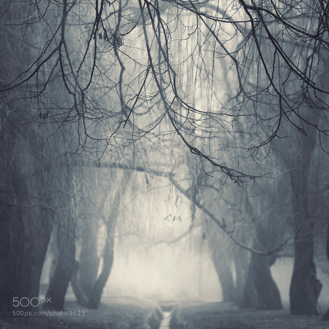 Photograph misty presentiment by nick Lisitsin on 500px