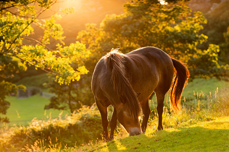 Photograph The Exmoor Pony by Adam Burton on 500px