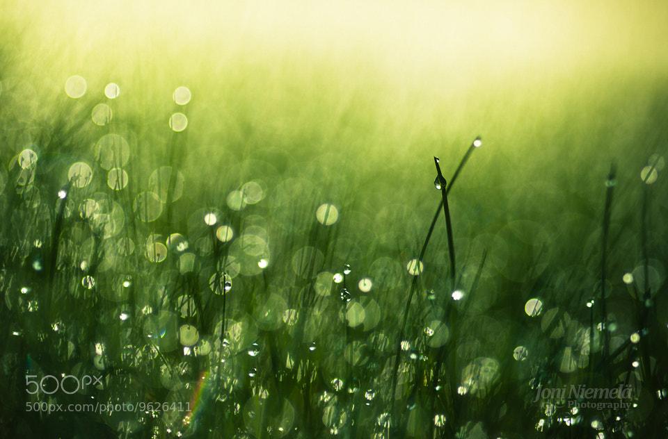 Photograph Morning Dew by Joni Niemelä on 500px
