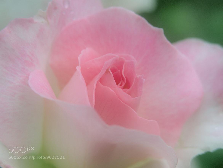 Photograph in tenderness by kazumi Ishikawa on 500px