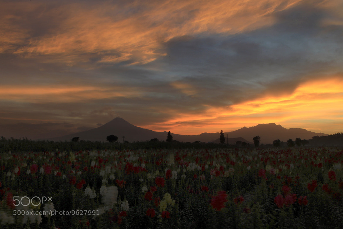 Photograph Flowers at sunset by Cristobal Garciaferro Rubio on 500px