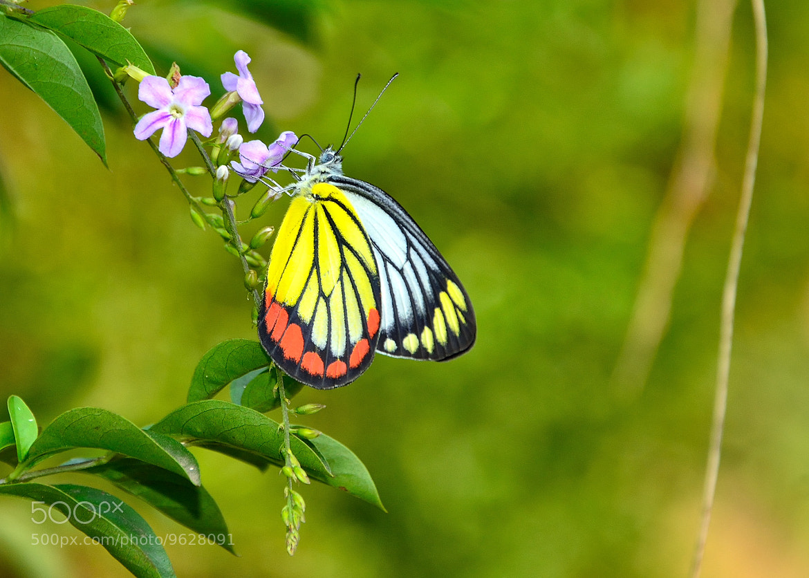 Photograph wings colour by Rachmad Aryw on 500px