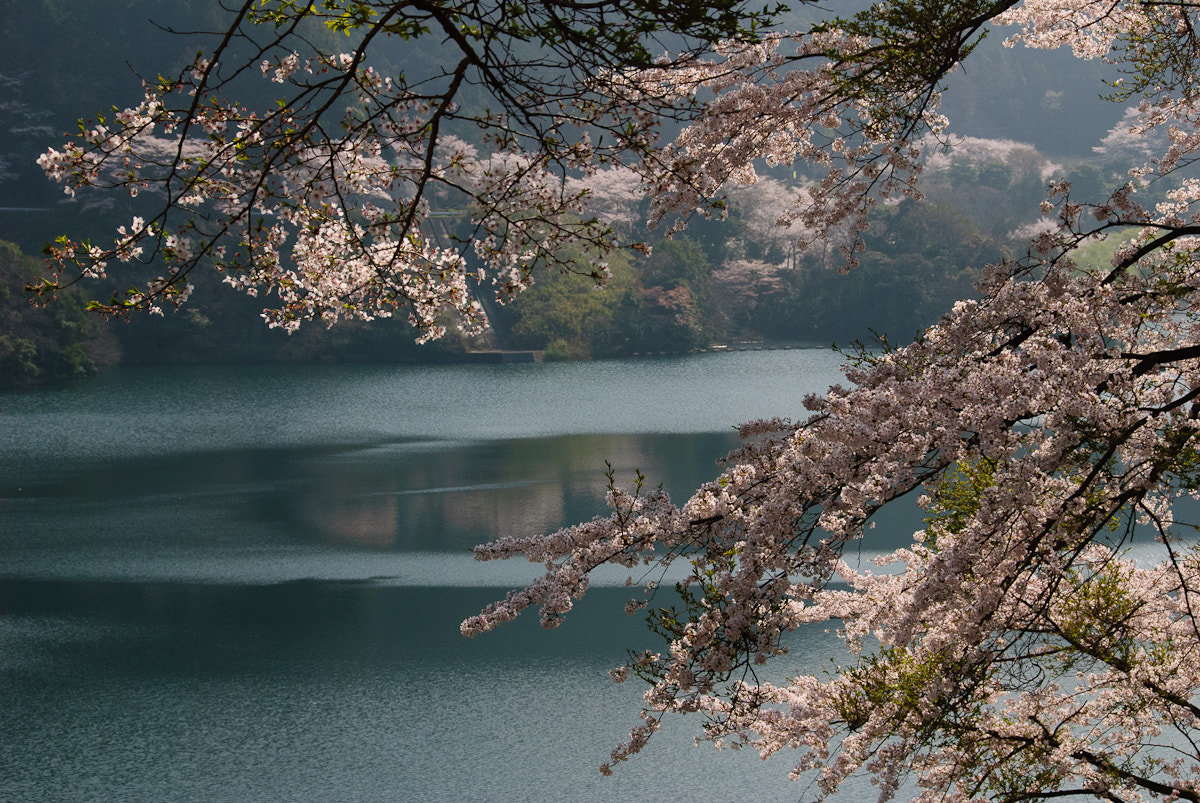 Photograph Cherry blossom and lake by Norio Ohki on 500px