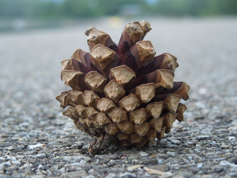 Photograph Pine Cone. by Capucine Mignard on 500px