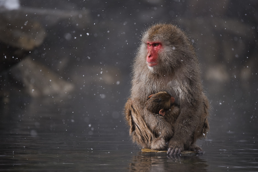 Mother and Her Baby by Kenji Yamamura on 500px.com