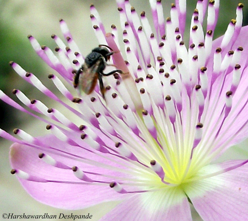 Photograph House-fly on a flower by Harshawardhan Deshpande on 500px