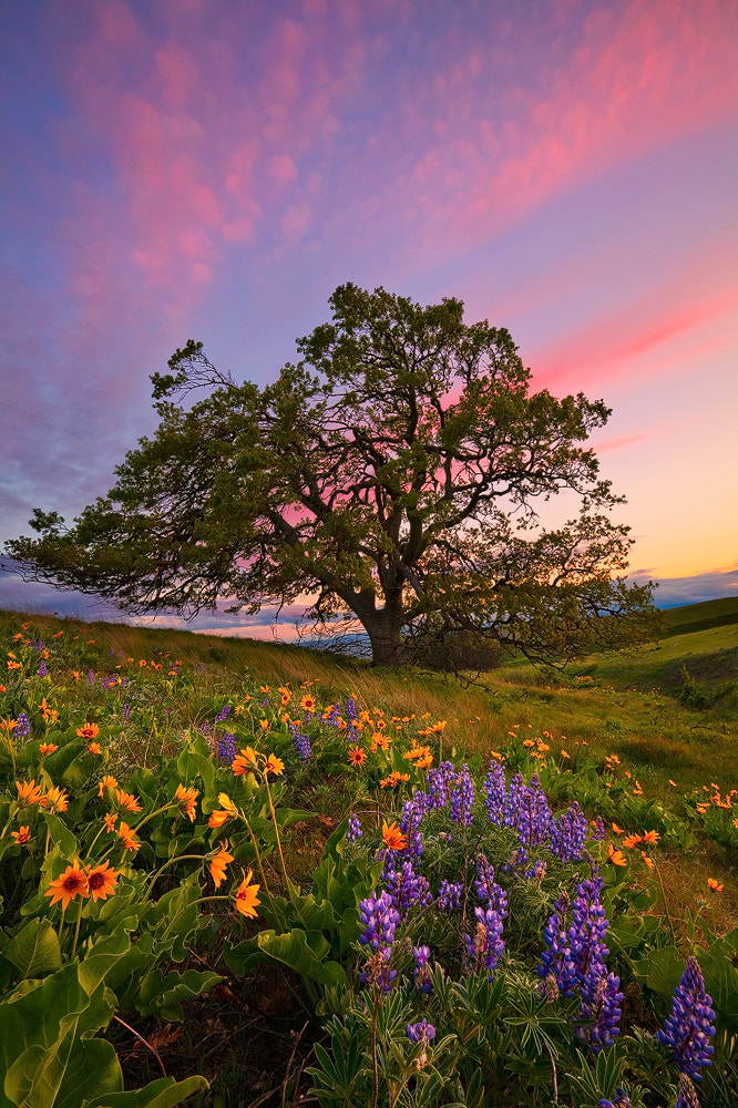 Photograph The Giving Tree by Atenciophotography on 500px