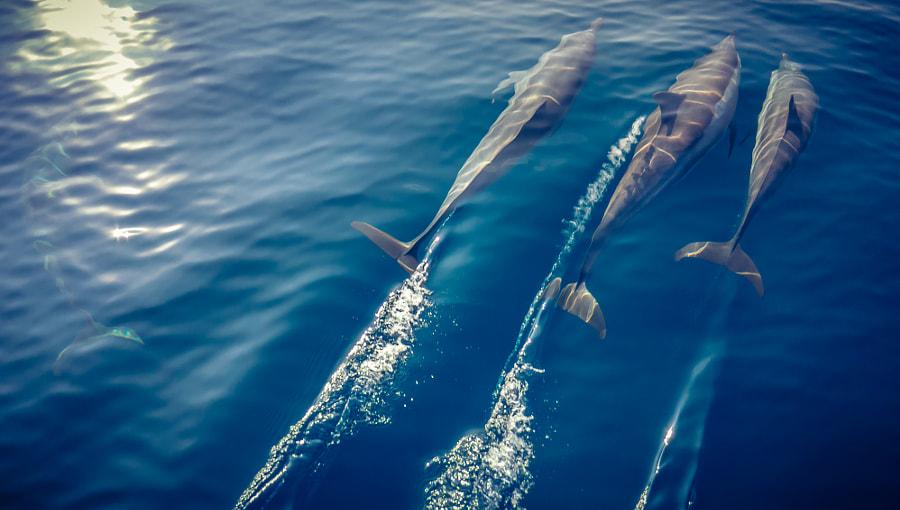Dolphins by Niklas Bernstein on 500px.com