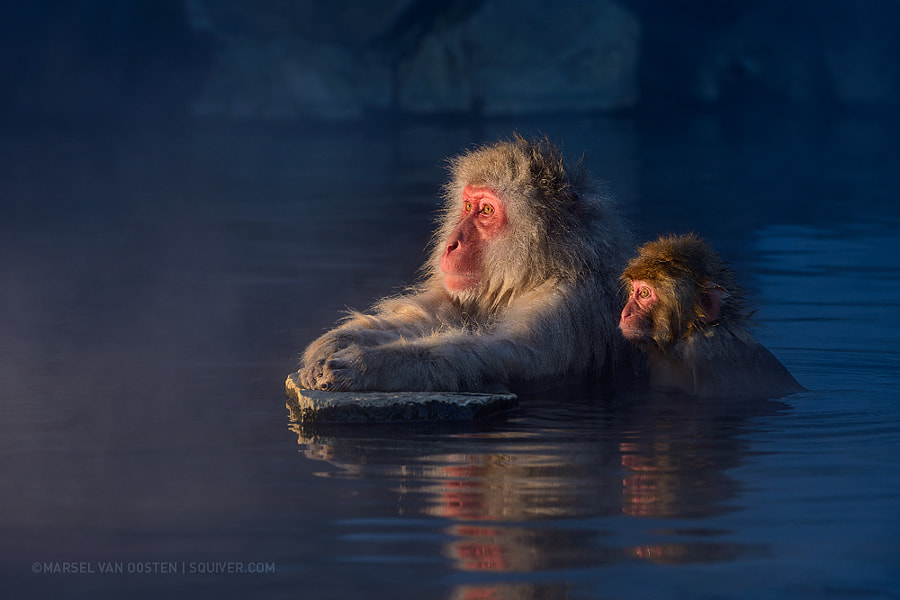 Photograph Watching Television by Marsel van Oosten on 500px