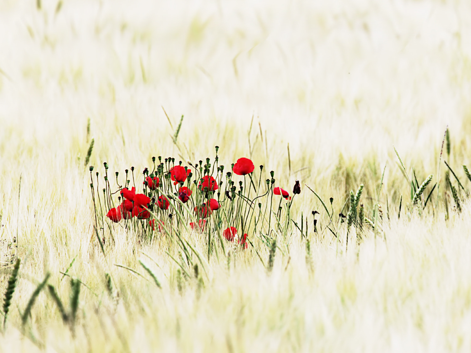 Photograph ...in the field by SuSanne MarX on 500px
