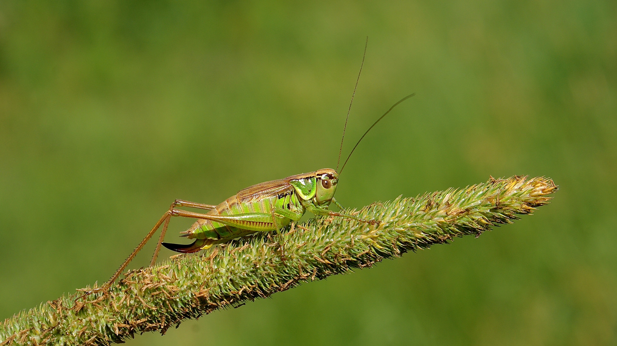 Photograph Field Cricket  by Zack Parton on 500px