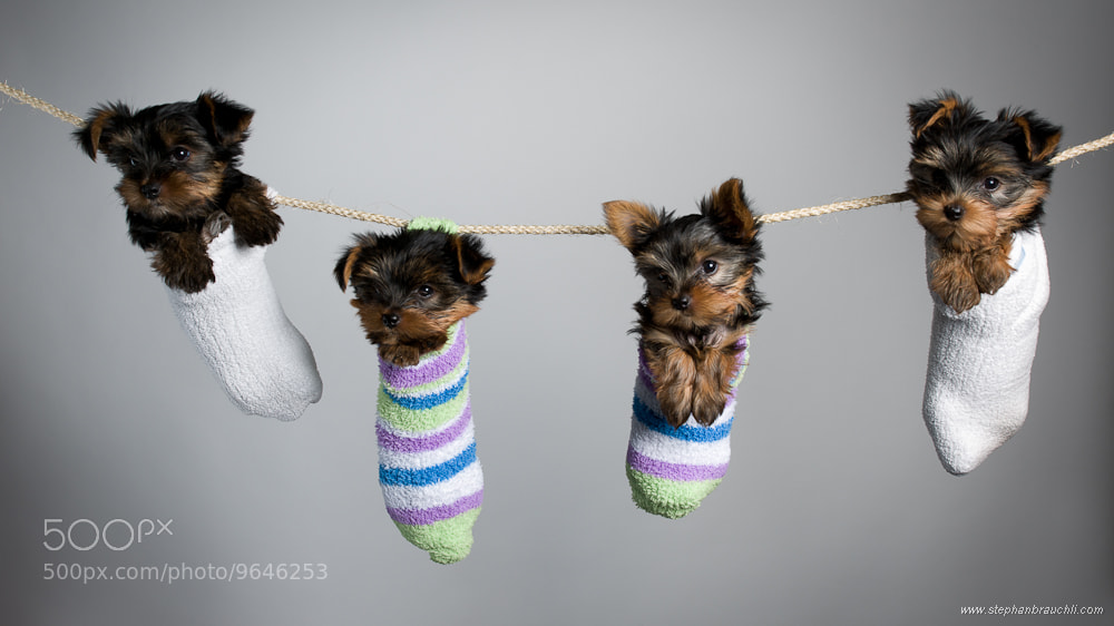 Photograph Hush puppies by Stephan Brauchli on 500px