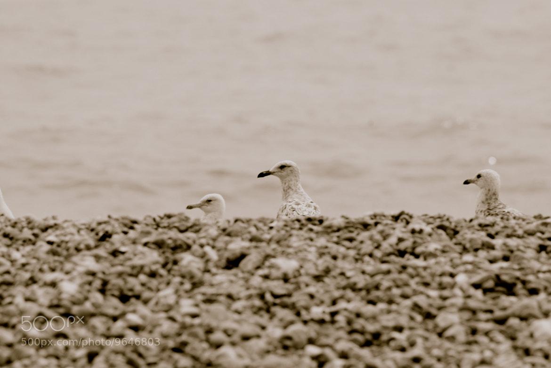Photograph Chicks by julian john on 500px