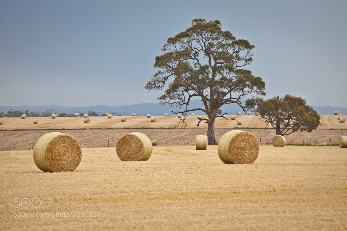 Photograph Dotted Bales by Robert Rath on 500px