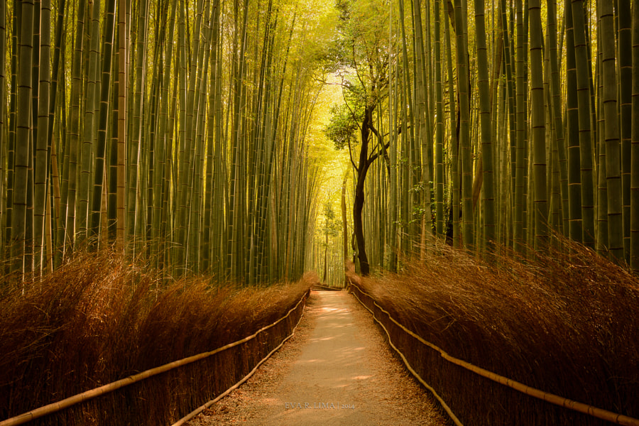Path to Serenity by Eva R. Lima on 500px.com