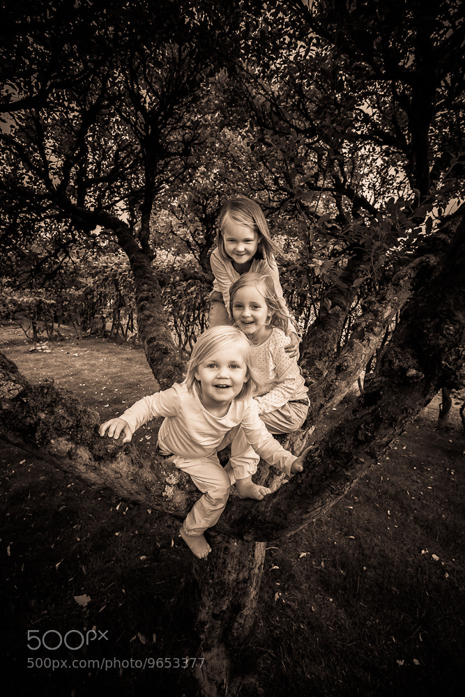 Photograph Three in Tree by Brian Dybdal Andersen on 500px