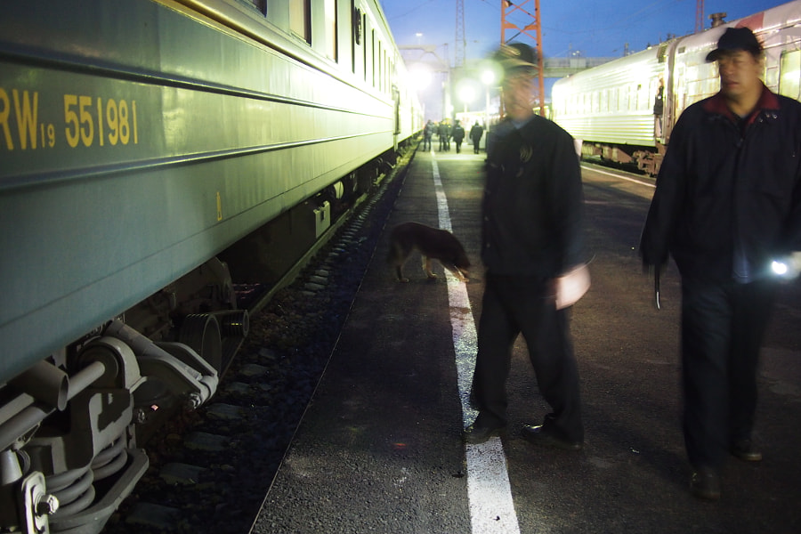 Photograph dog on platform, Transmongolian Train from Moscow to Ulaanbaatar (Mongolia) by parentheticalpilgrim on 500px