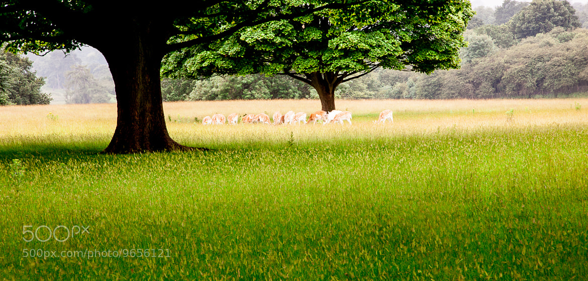 Photograph Deer  by Kevin McGrath on 500px