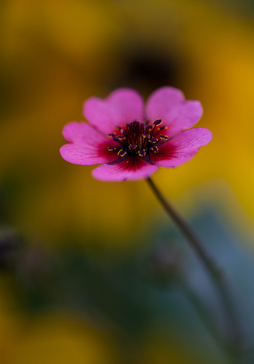 Photograph In My Yard by Susan Humphrey on 500px