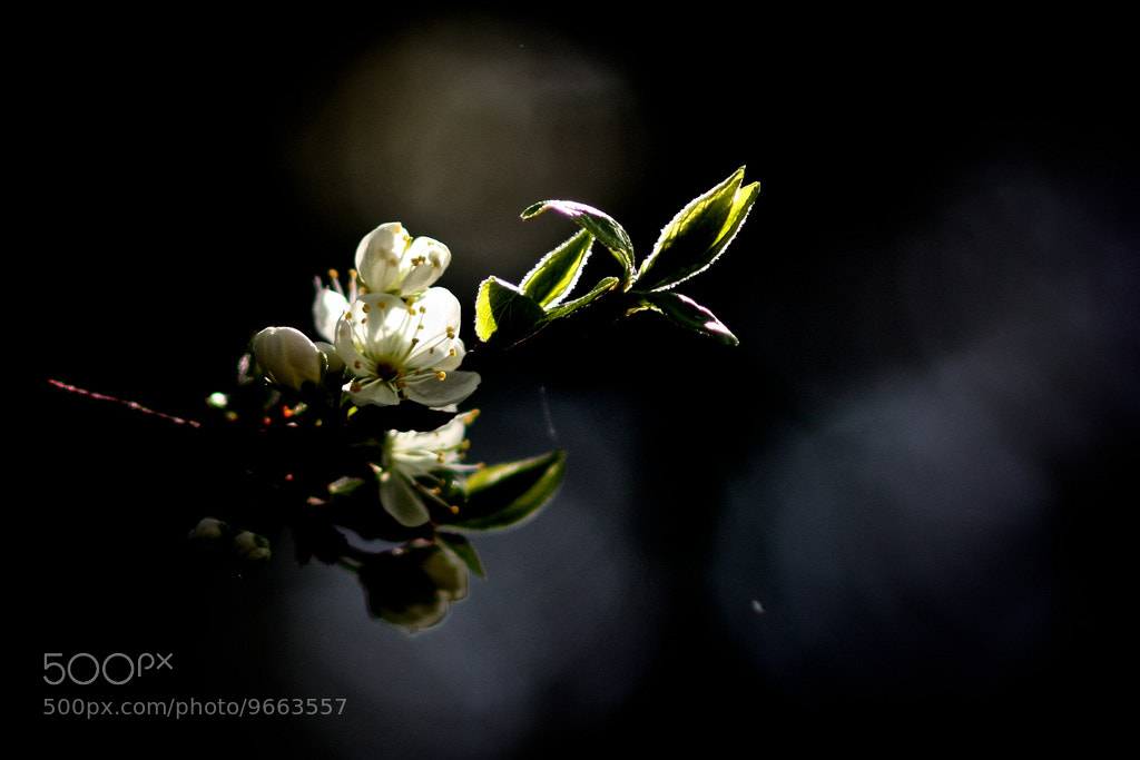 Photograph Spring Has Come by Clémence L. on 500px
