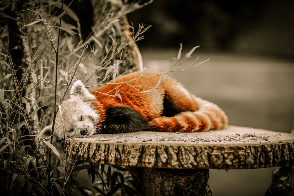 Photograph nap time by Ben Martin on 500px