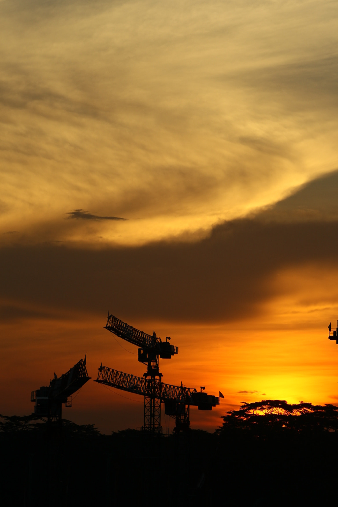 Photograph Cranes in the sky by Gabriel Chua on 500px