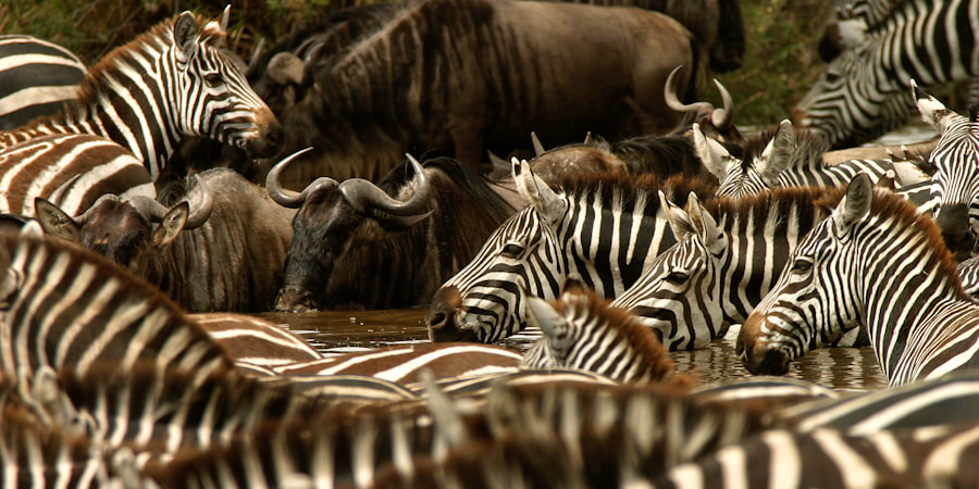 Photograph A Day at The Waterhole by Mario Moreno on 500px