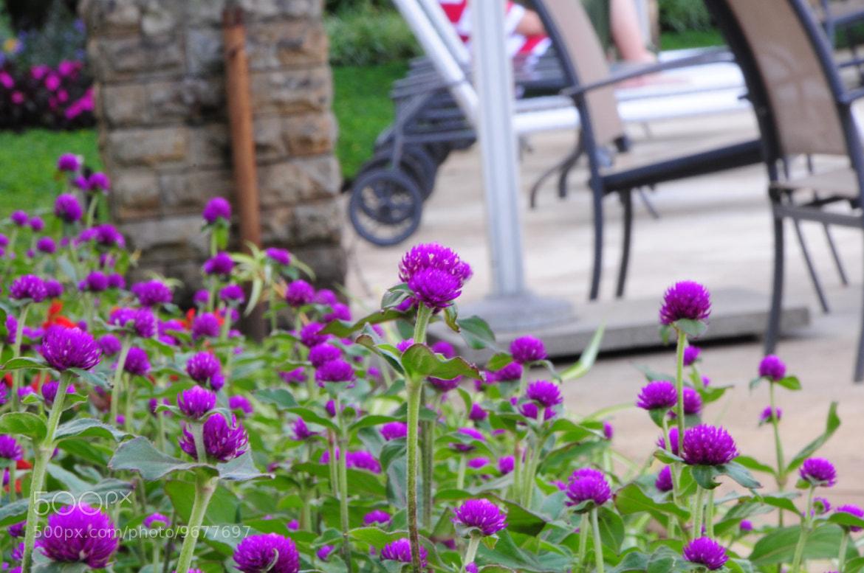 Photograph Purple by Welhelmus Dengi on 500px