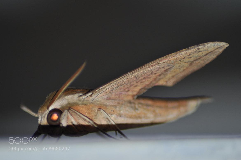 Photograph Aerodynamic moth by Ziyad Kadayer on 500px