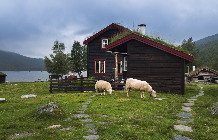 Sheeps near a norwegian house at the lake shore by Timofey Lebedev on 500px.com