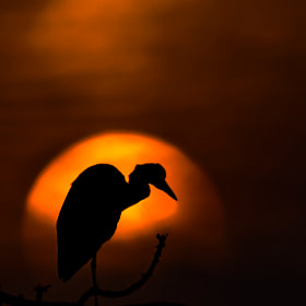Finding your place in the sun... by Morkel Erasmus (morkelerasmus)) on 500px.com