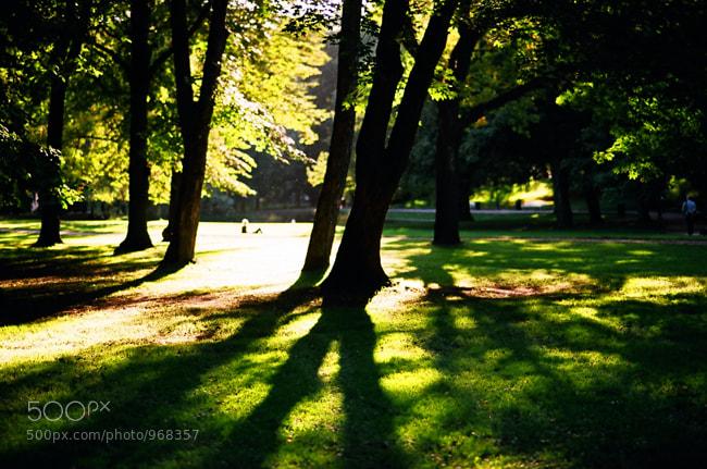 Photograph park by Irina Okeanova on 500px
