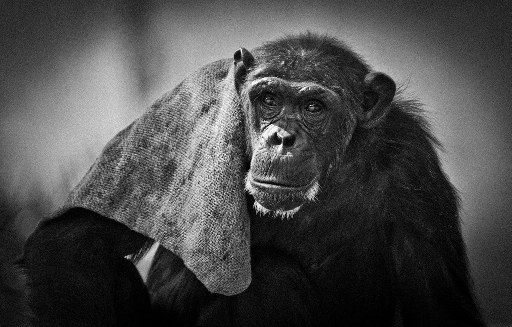 Photograph Aging by Shimi Zacken on 500px