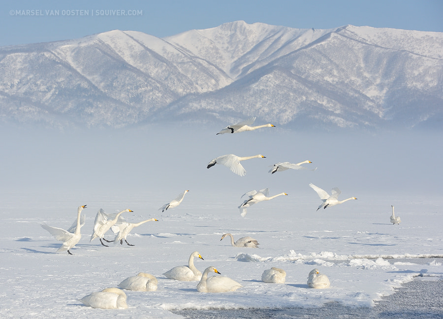 Photograph Serenity In White by Marsel van Oosten on 500px
