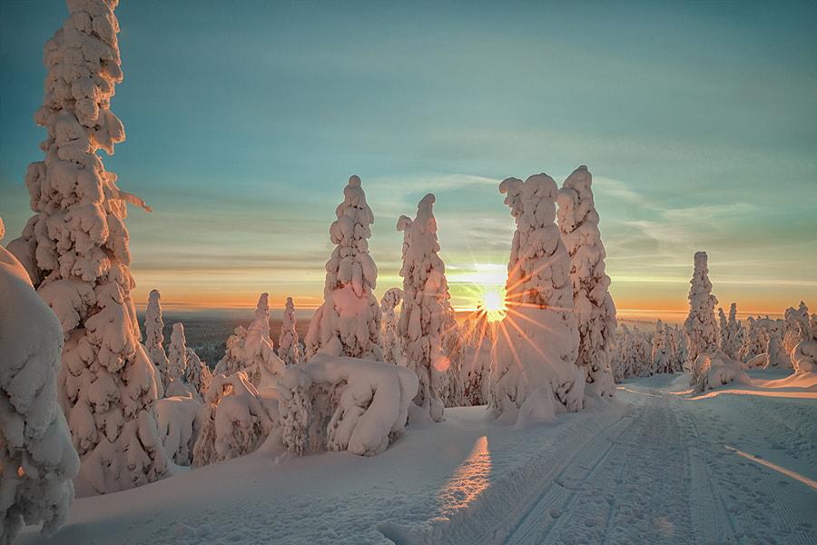 Winterwonderland, автор — Menno Schaefer на 500px.com