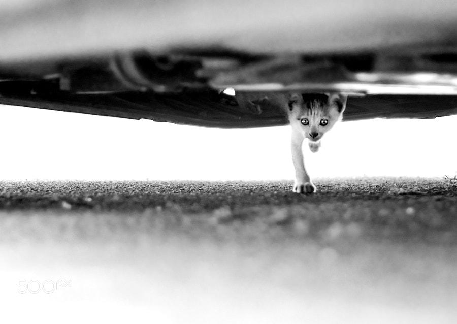 Photograph *** by Keren Segev on 500px