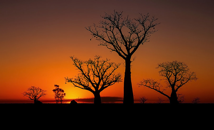 Photograph Outback Christmas Trees by Mark Wassell on 500px