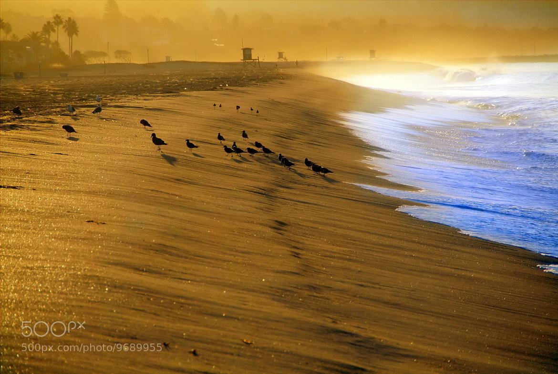 Photograph Golden NB by Andrzej Pradzynski on 500px