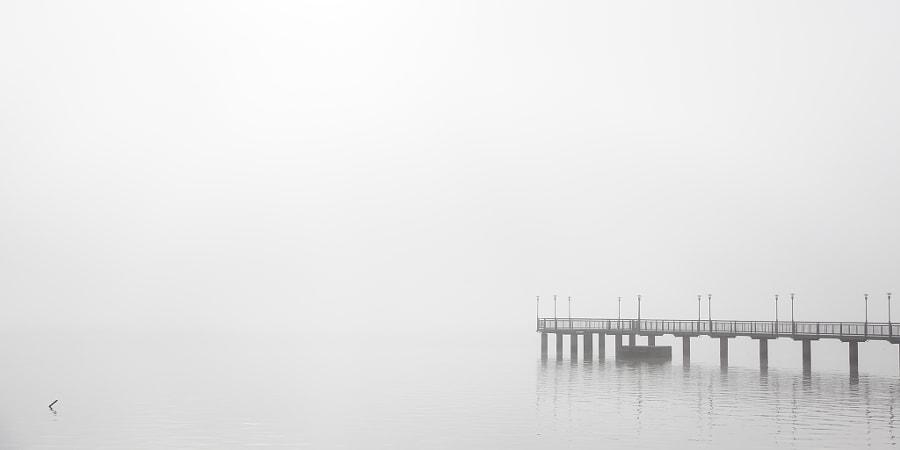 Entre agua y niebla...