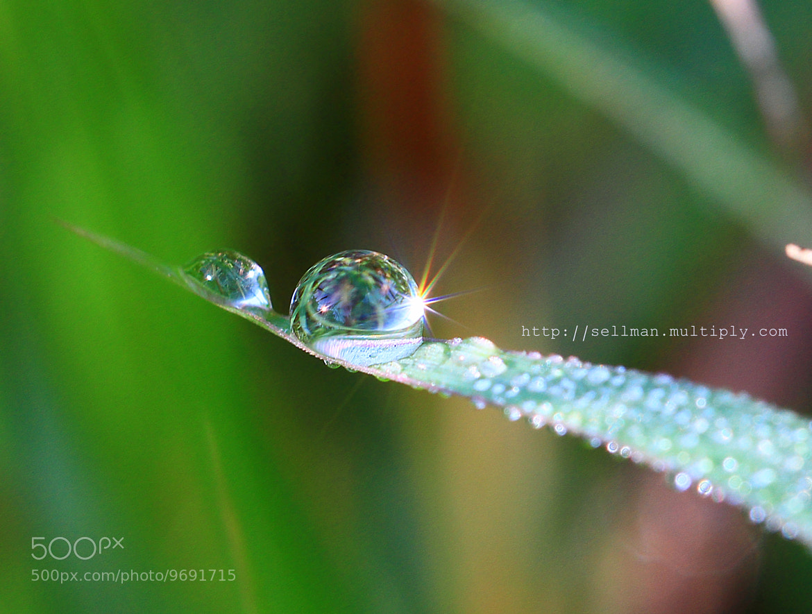 Photograph dew by Montree Oonrua on 500px
