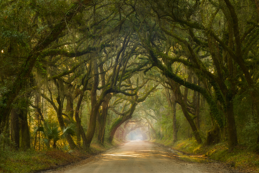 Photograph Deep South by Joseph Rossbach on 500px