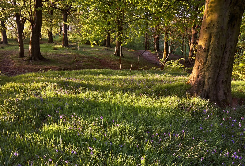 Photograph Bluebells, Hapton Woods, Lancashire by Russell Turner on 500px