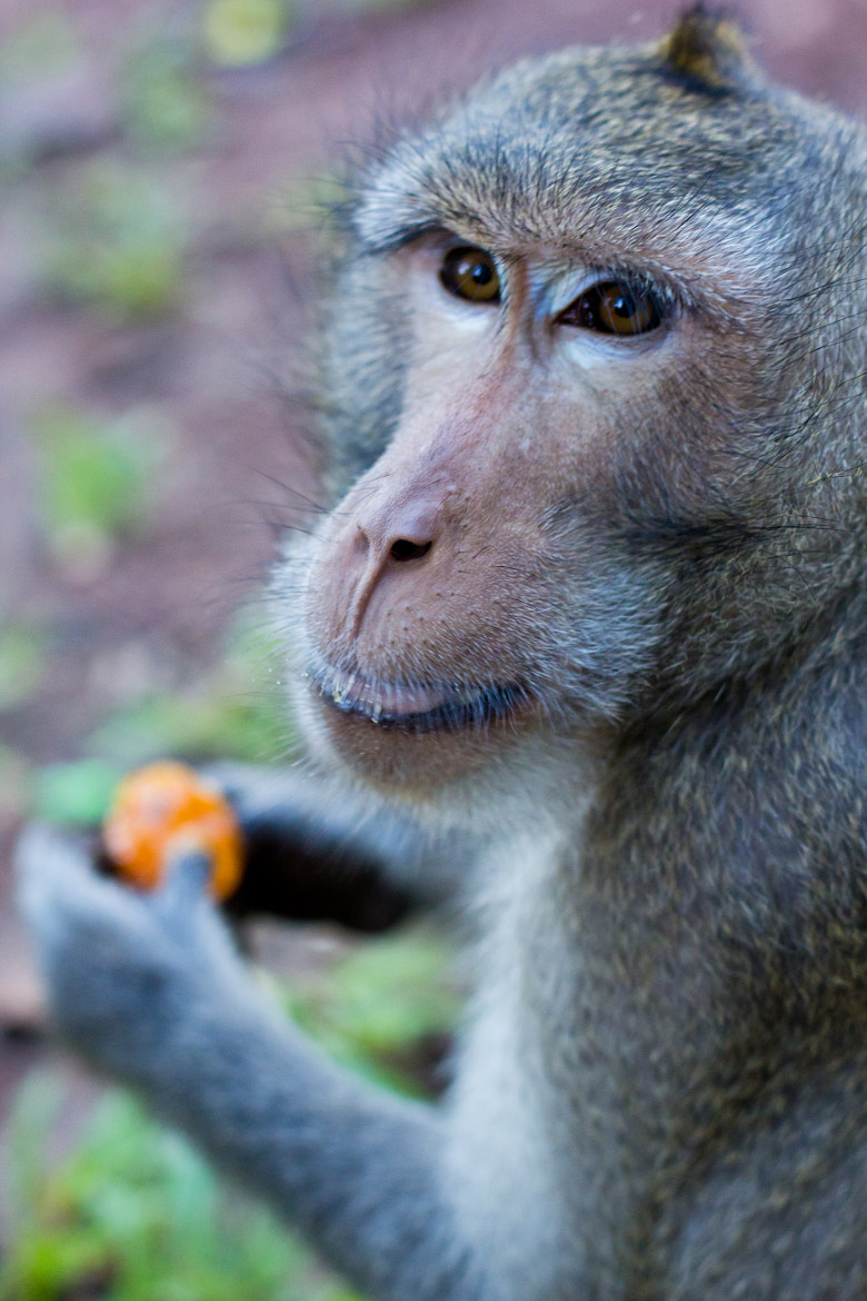 Photograph Hungry monkey by Asia Cam on 500px
