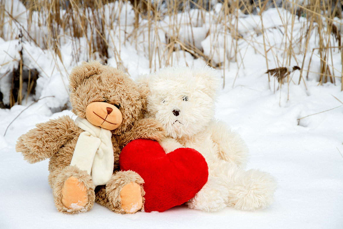 Teddy bears for Valentine's Day