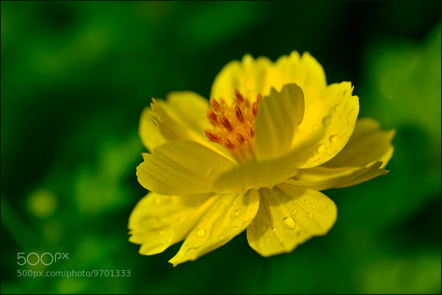 Photograph Yellow Submarine by Soter . on 500px