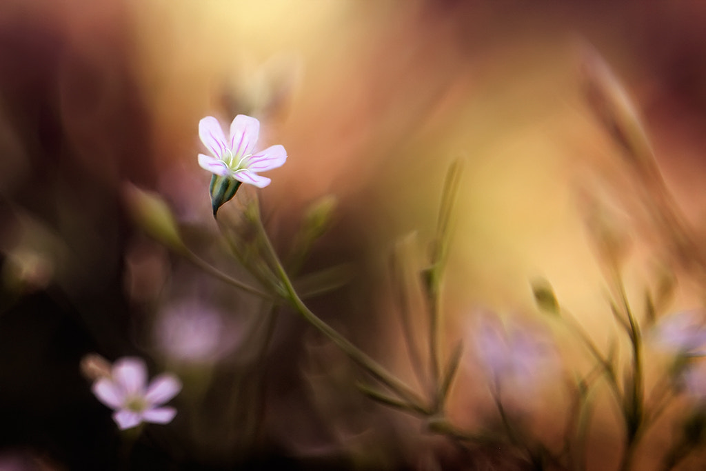 Photograph Small wild flowers. by Péter Bognár on 500px