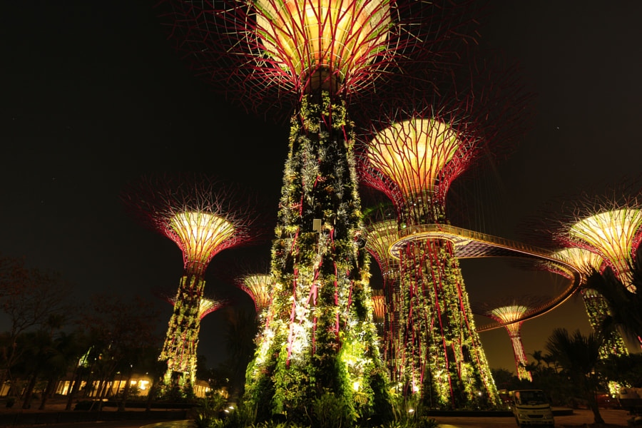 Gardens By The Bay (Night HDR)